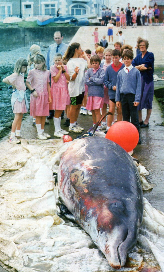 Children with dolphin092